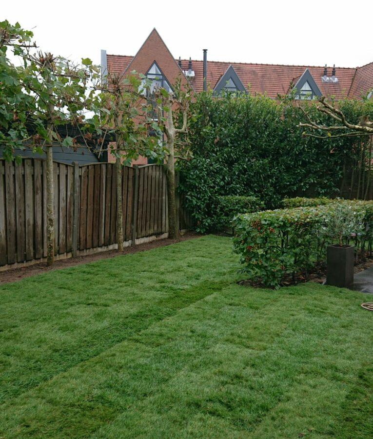 tuin-opijnen-gras-aanleg